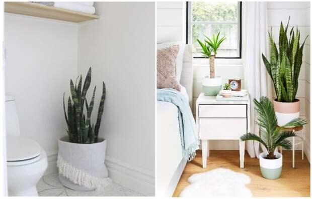 Цветы можно хранить в спальне или в ванной