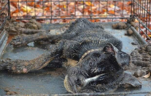 Все были уверены, что эта собака умрет! Но нашелся человек, который поверил в нее!