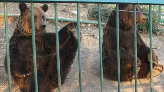 Жители Ростова пожаловались наиздевательства над бурым медведем вчастном зоопарке