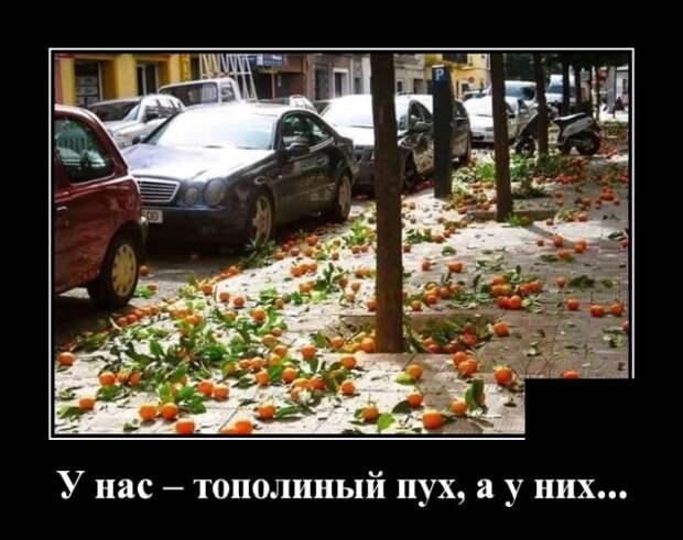 Демотиватор про апельсины