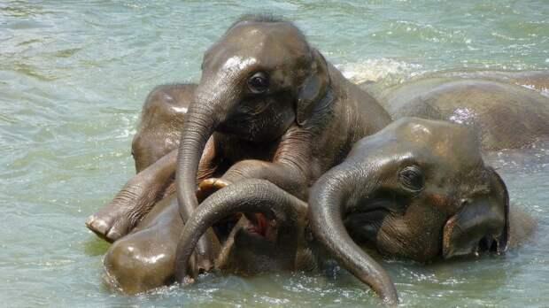 Сокращение популяции слонов стало главной темой обсуждения правительства Зимбабве