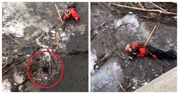 Сотрудник береговой охраны успел в последний момент спасти щенка