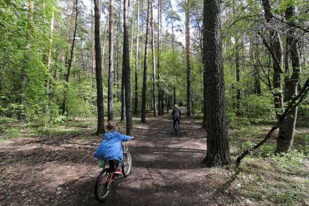 Свердловские власти разрешили «Майскую прогулку». Условия