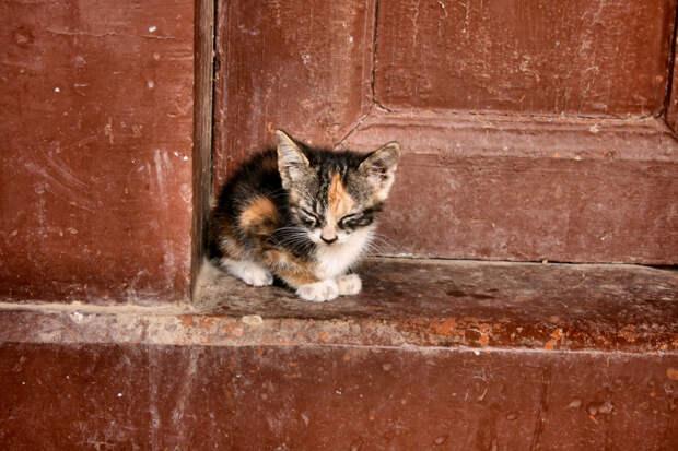 Минстрой предложил открыть подвалы для спасения бездомных кошек