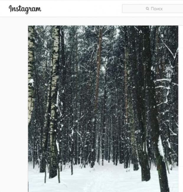 Фото дня: заснеженные березы в Лианозовском питомнике