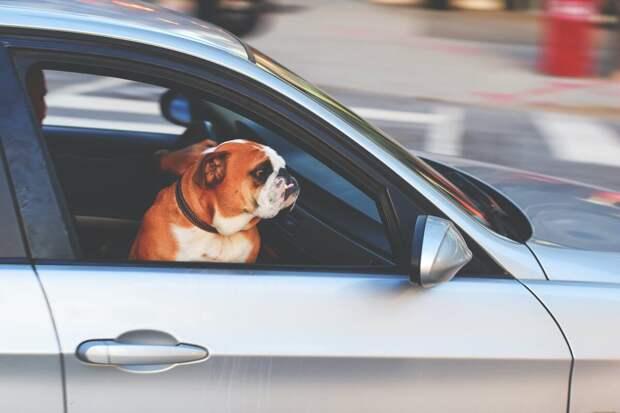 9 советов для начинающих водителей — первый день за рулем