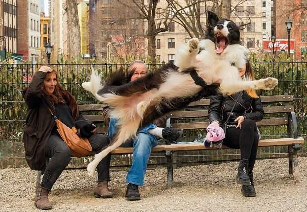 16 веселых песиков, призванных радовать нас даже на фото