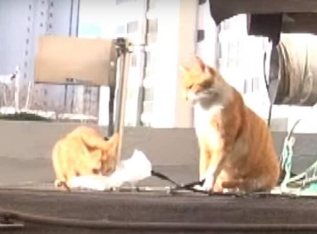 Бродячая кошка отказывалась от еды, если ту нельзя было унести с собой. И однажды её секрет раскрылся