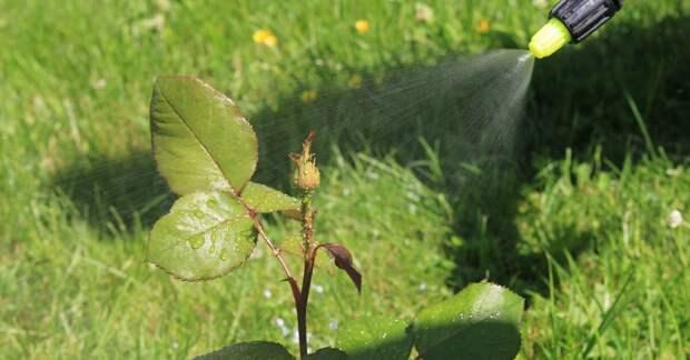 Как защитить растения от вредителей без химии?
