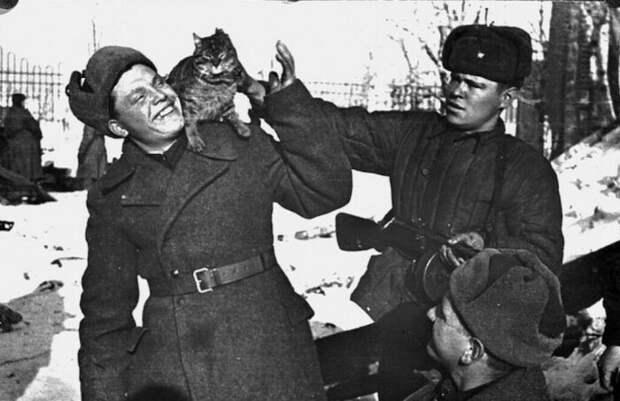 Как коты спасали советских солдат в Великую Отечественную