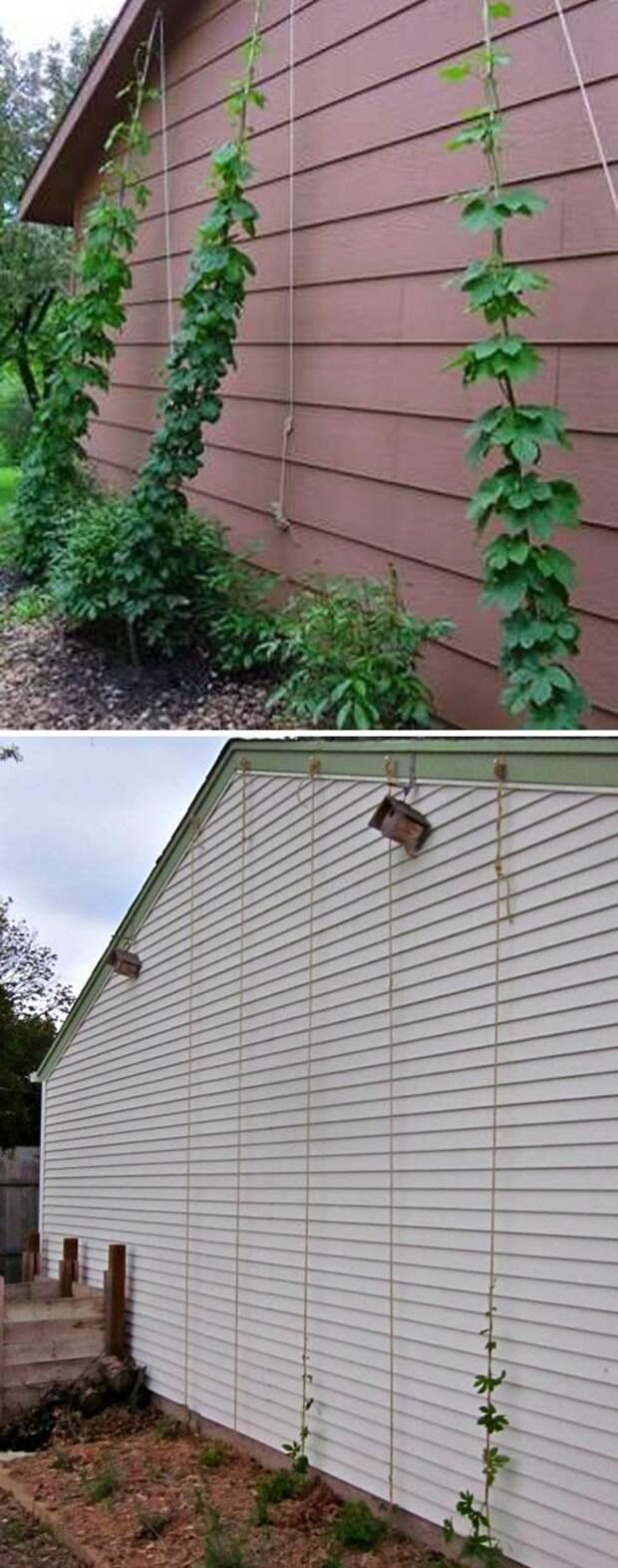 Успешные способы создания подпорок для обустройства грядок на даче