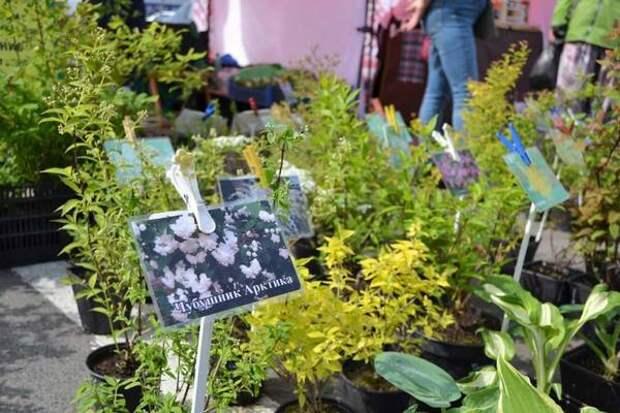 В Курске открылась садовая ярмарка