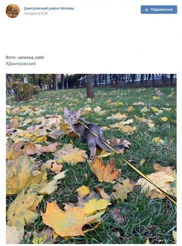 Фото дня: бескомпромиссный выгул котов