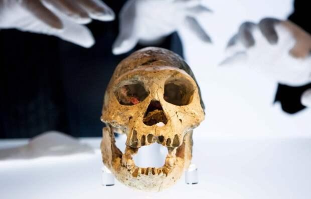 Восстановлен геном европейца, который жил 36 тыс. лет назад