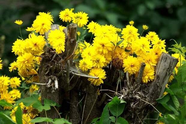 Фотографии цветов На досуге.