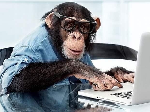Чему нас учат обезьяны?