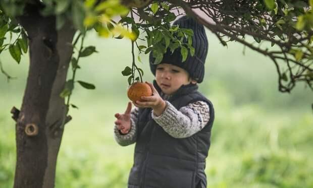 Доктор Комаровский напомнил об опасности фруктов для маленьких детей