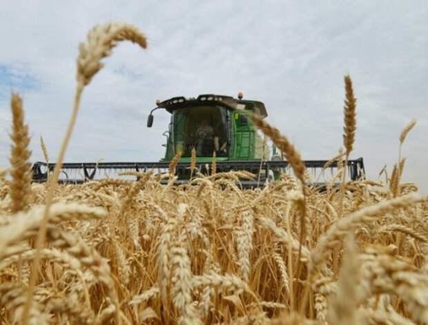 Латвия живет за счет российской пшеницы