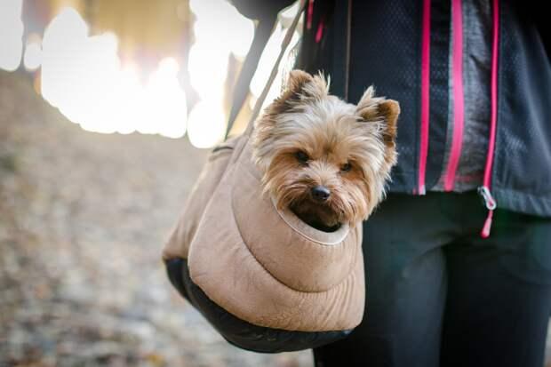 Во время рейса Симферополь-Омск женщина выпустила собаку в салон самолёта