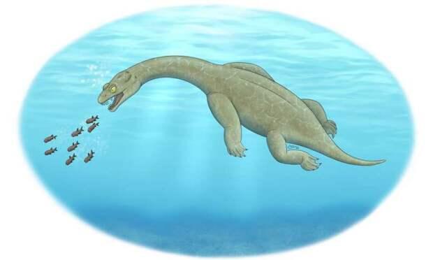 Ученые обнаружили новый вид древней морской рептилии