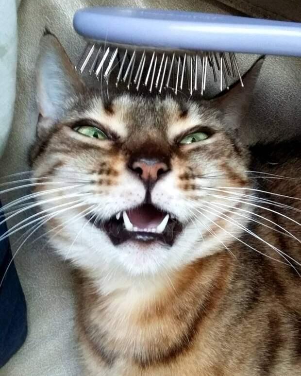 15 доказательств, что коты умеют улыбаться