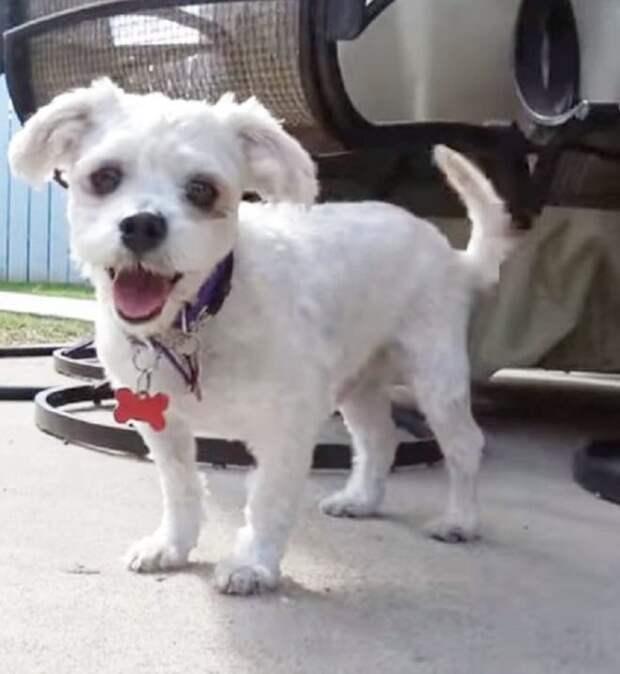 Бездомный пёс никого к себе не подпускал. Чизбургер помог установить дружественные связи с найдёнышем