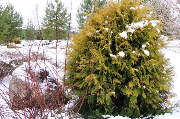 Какие растения составят основу зимнего сада