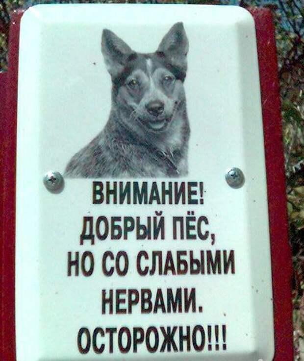 Креативный подход или Осторожно, во дворе злая собака (15 фото лучших табличек)