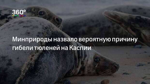 Минприроды назвало вероятную причину гибели тюленей на Каспии