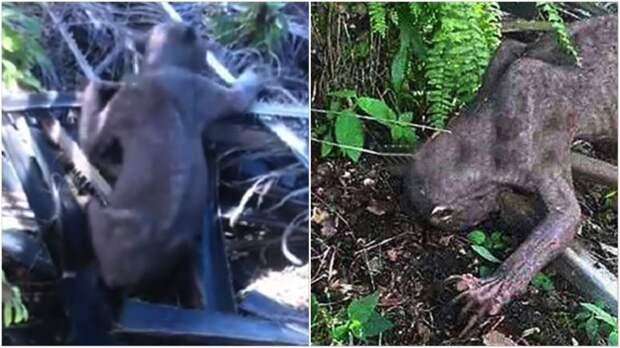 Испуганные жители деревни избили «внеземное» существо! Поистине душераздирающая история! жизнь, истории, удивительная