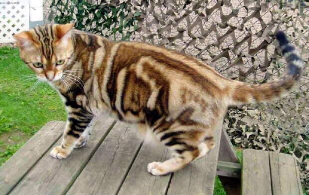 Лучшие афоризмы про кошек (по мнению самих кошек)