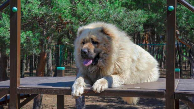 Защитники и охотники: топ-7 самых крупных пород собак
