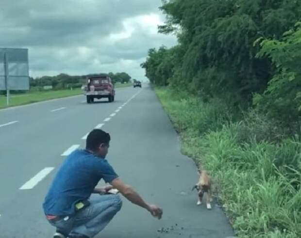 Робко стоящая на дороге, больная и голодная собака, ждала чтобы хоть одна машина остановилась ради нее