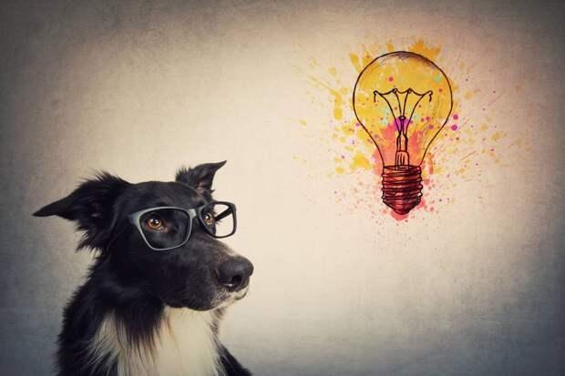 Самый умный собакен: какие породы заслуживают звания самых умных