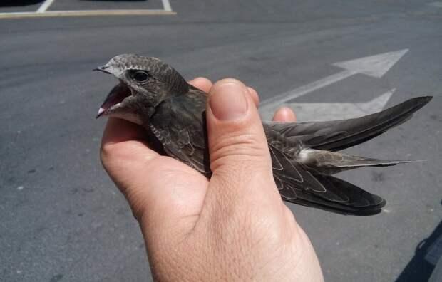 Спасатели из САО освободили попавшую в ловушку сову, оказавшуюся стрижом