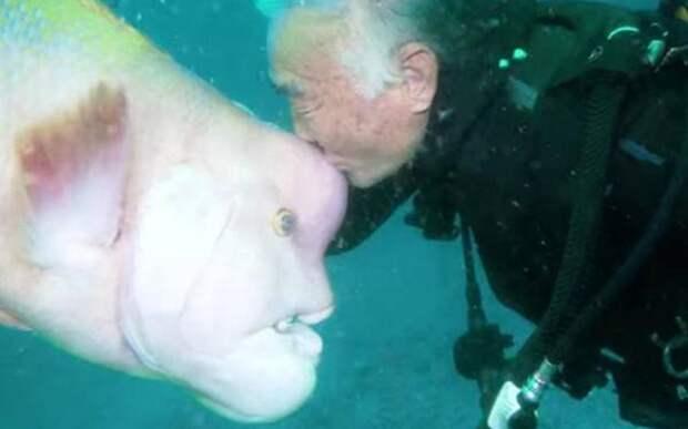 Дайвер более 30 лет дружит с рыбой, которую он выходил после ранения