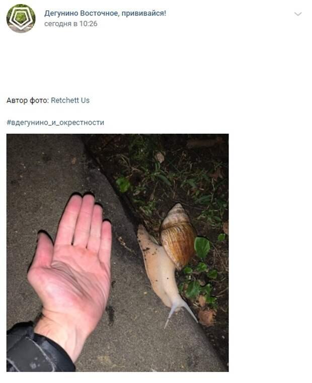 Фото дня: гигантская улитка сбежала от кого-то на Дубнинской