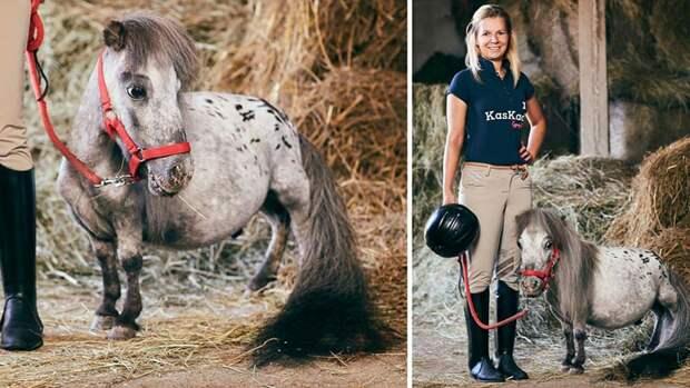 В Польше нашли самого маленького коня в мире