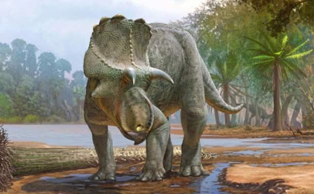 Палеонтологи обнаружили в Нью-Мехико самый древний вид рогатых динозавров