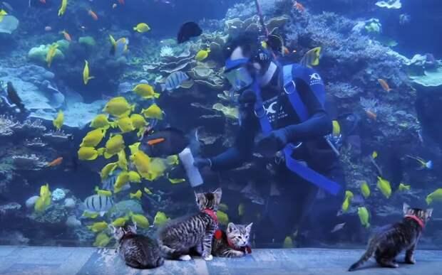 В Штатах котятам устроили экскурсию по океанариуму