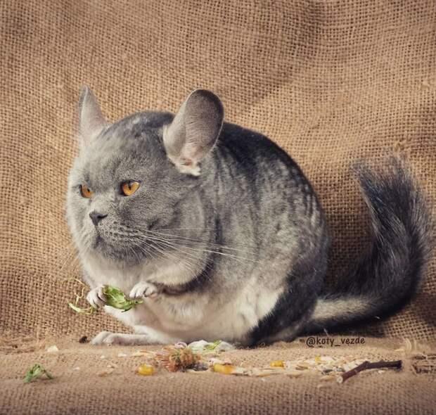 Как бы выглядели животные, будь у них кошачьи мордочки