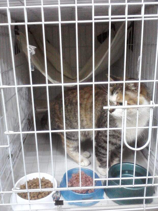 «Днём кошка спала внутри, а на ночь её выставляли на улицу!» Латифа не ждала любви, но она пришла…)