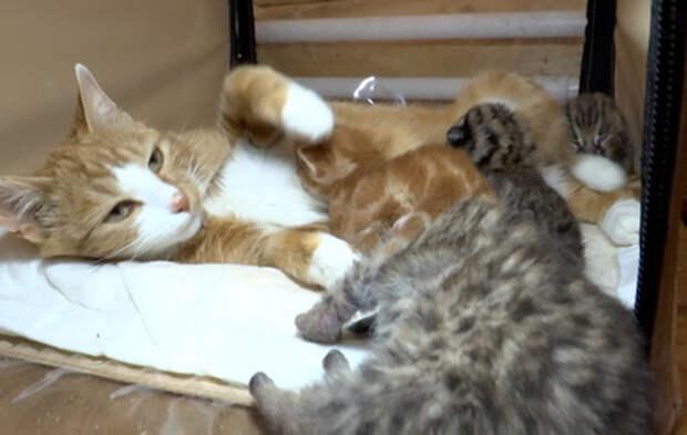 Кошка Мася выкармливает диких котят в Приморье