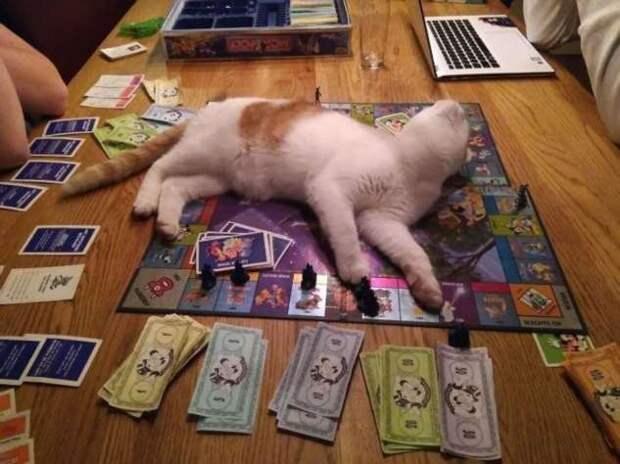 Коты, наглость которых зашкаливает (14 фото)