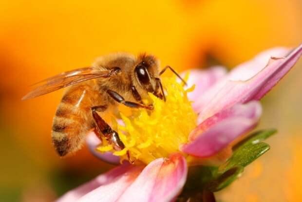 Почему весенние лесные цветы важны для баланса всей экосистемы