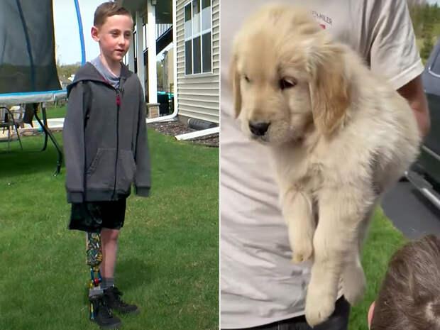 Мама вдохновила больного сына, подарив ему щенка с деформированной лапкой
