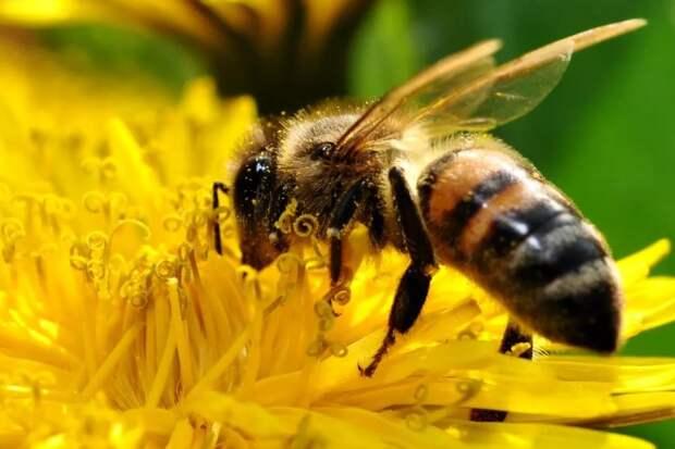 Надо смириться - пчел уже не спасти! Но и конца света не будет!