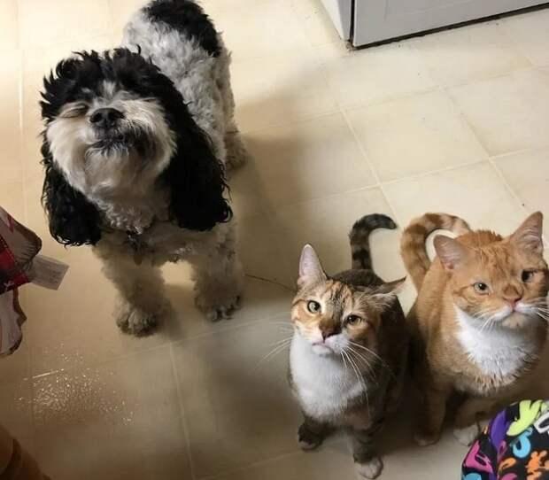 Собака и коты