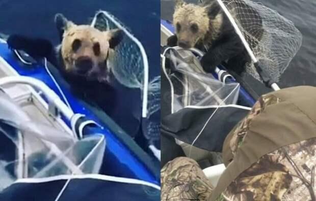 Когда медвежата стали тонуть на середине озера, местные рыбаки бросились им на помощь
