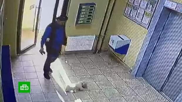 Установлена личность петербуржца, который избил одну собаку другой